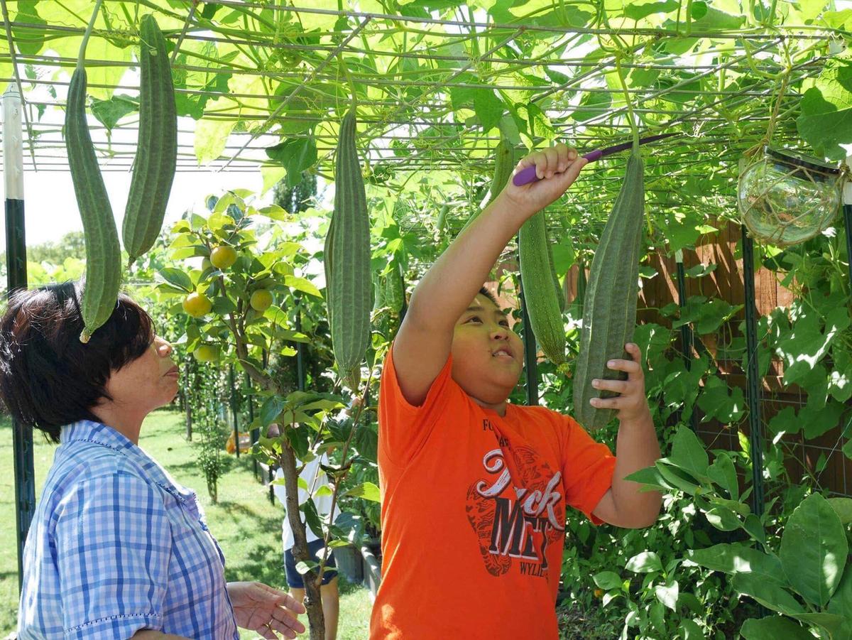 Con gái tặng mẹ vườn rau Việt trên đất Mỹ - Đời sống