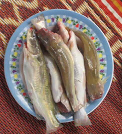 Cá chốt vừa được đánh bắt trên sông Ba. Ảnh: Tùy Phong.