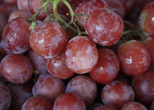 Giá trái cây giảm nửa so với đầu mùa ảnh 5