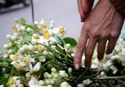 Image result for mía ướp hoa bưởi