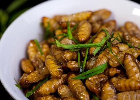 Nhộng tằm là nguyên liệu chính chế biến nên nhiều món xào ngon miệng.