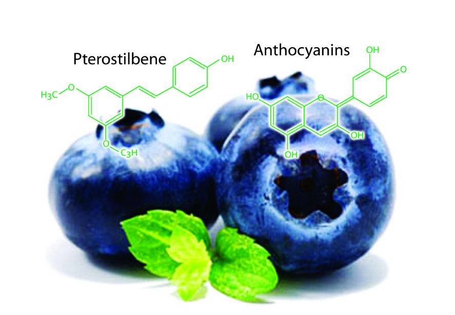 blueberry-1[1336088675].jpg