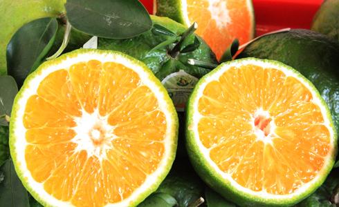 Những loại trái cây tốt từ vỏ đến ruột