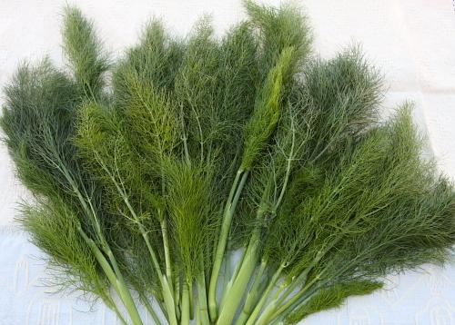 fennel 1371197792 500x0 8 loại gia vị và thảo mộc có tác dụng chữa bệnh