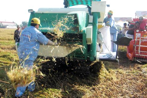 Chiếc máy gặt đập của ông Phạm Hoàng Thắng. Ảnh nhân vật cung cấp.