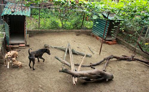 Chuồng nuôi chó Phú Quốc có nền cát, thả cành cây, thân gỗ vào để chó vận động. Ảnh: Hoàng Phương.