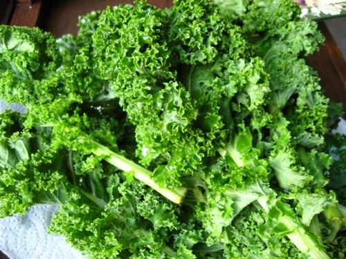 Cải xoăn là thực phẩm giàu canxi, trung bình 100 g cải xoăn chứa khoảng 150 mg canxi. Ảnh: shamatapilates.com.au