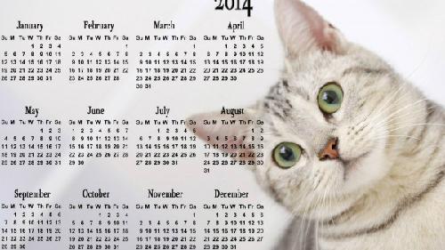 cute-cat-2014-calendar-hd-wall-7179-3744