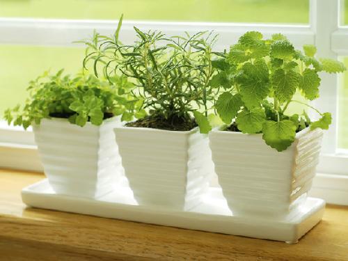 Một số loại rau gia vị như húng quê, húng chanh, bạc hà, hành lá có thể trồng ở bậc cửa sổ gian bếp để tận dụng ánh sáng.