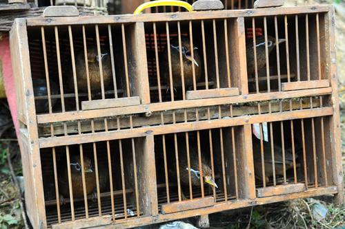 chợ chim họ bỏ hàng giờ để ngắm nghía nghe chim hót