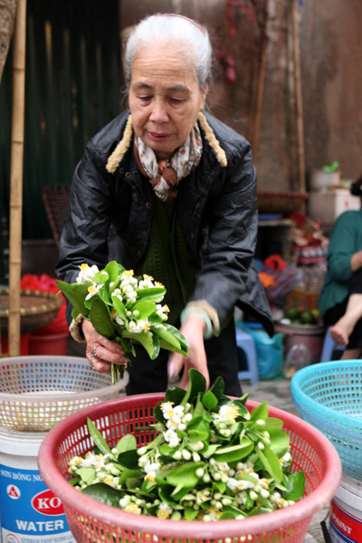 Đã bao năm nay ở góc phố Hàng Khoai bà Thu vẫn ngồi đó bán hoa cúng, mùa nào hoa đó. Cứ tháng 3 đến hàng bà luôn đầy ắp hoa bưởi .