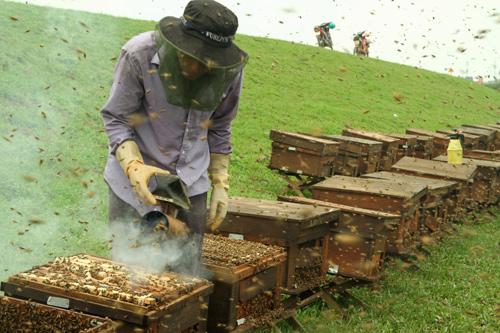 mật ong chín Honnimore