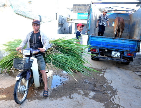 21 5 Anh 5 Cho bo 3738 1400658208 Đến thăm khung cảnh chợ buôn bò ven quốc lộ tại Quảng Ngãi