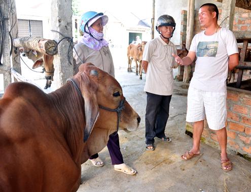 21 5 Anh 6 Cho bo 6196 1400658208 Đến thăm khung cảnh chợ buôn bò ven quốc lộ tại Quảng Ngãi