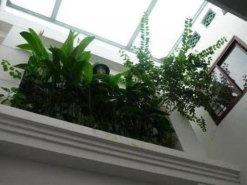 Khu cầu thang lấy sáng, kết hợp mảng xanh.