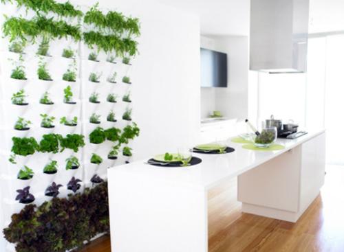 Bạn hãy mang hơi thở thiên nhiên vào phòng khách, nhà bếp hay phòng đọc sách với một vườn thảo mộc mini. Ảnh: decoist.com