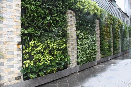 Mảng xanh che phủ tường rào