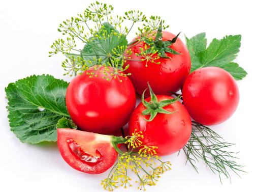 Chọn cà chua chín, mềm. Ảnh: Hồng Diễm