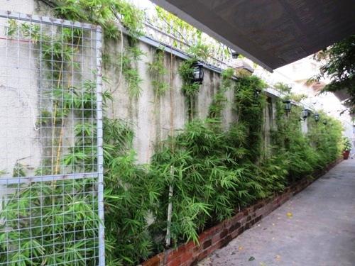 Ngôi nhà mát mẻ với mảng tường cây xanh 7