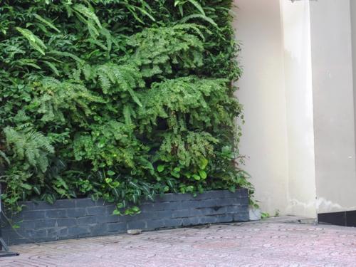 Các loại cây được chọn ngẫu hứng theo sở thích của gia chủ