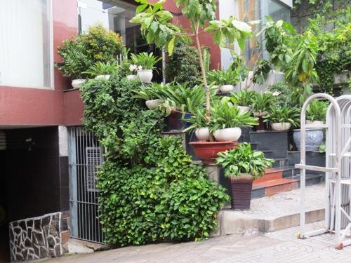Giải pháp xanh giúp che lấp những mảng bê tông trống trơn