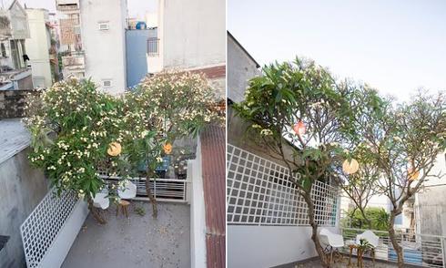 Ngôi nhà lãng mạn với tán hoa sứ trên mái