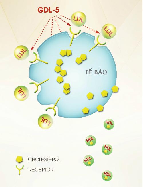 Receptor-te-bao-1426-1416406933.jpg