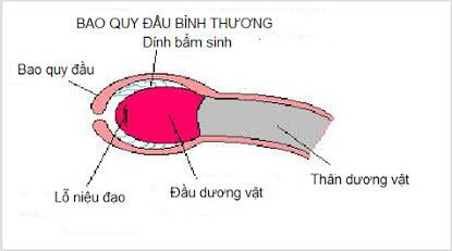 bao-quy-dau-9353-1418378881