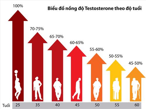 Các nghiên cứu cho thấy, sau 30 tuổi, nội tiết tố namtestosterone trung bình giảm 1% mỗi năm.