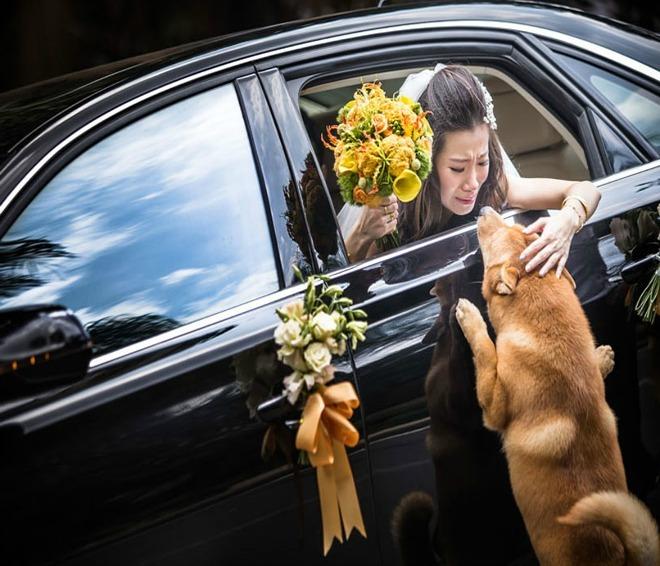 Những bức ảnh cưới đoạt giải 2014-7