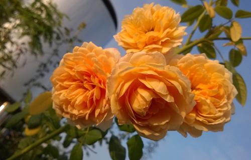 Vườn hoa trăm loại trong ngôi nhà giữa lòng Hà Nội