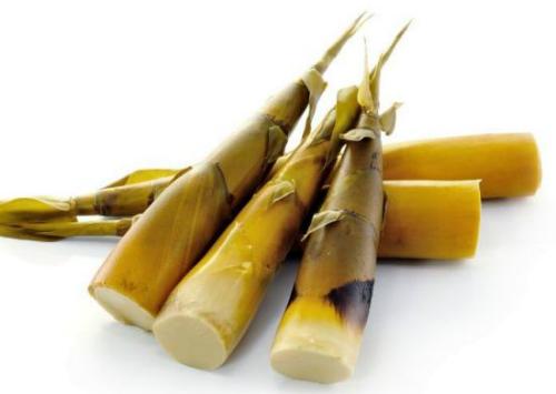 Bambooshoot-9540-1424240547.jpg