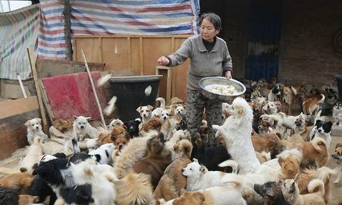 5 phụ nữ cưu mang 1.300 chú chó nhỏ