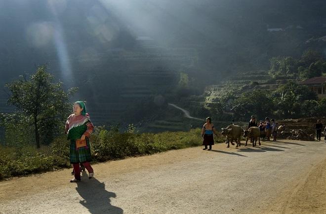 Sáng sớm trời đất còn mù sương, bà con dân tộc dắt trâu đến bán ở chợ Cán Cấu, Hà Giang.