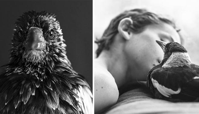 Chú chim nhỏ được cứu trở thành bạn thân thiết của gia đình.