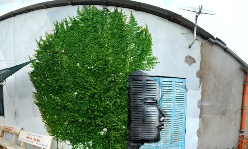 Những bức tường xanh sáng tạo nhờ bàn tay con người