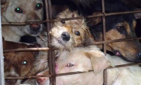 Con đường buôn lậu chó giết thịt vào Việt Nam