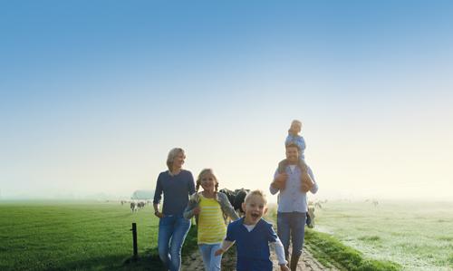 Trang trại bò sữa tại Hà Lan rộng hàng trăm ha. Anhr:FrieslandCampina.