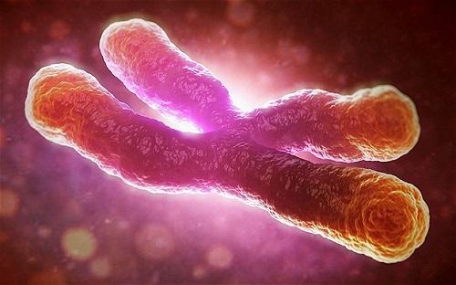 Telomere co ngắn lại nhanh chóng ở những người phát triển ung thư sau này. Ảnh: Telegraph.co.uk