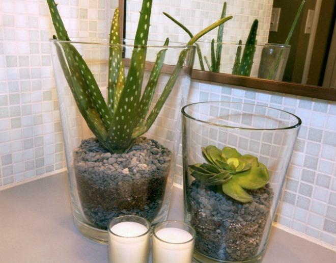 10 loại cây xanh hữu ích trồng trong phòng tắm