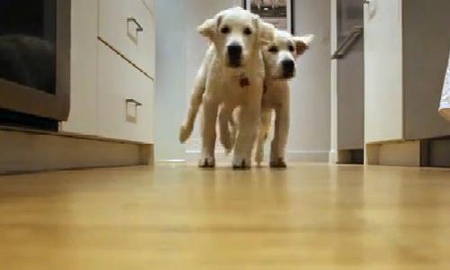 Quá trình trưởng thành của hai chú chó qua video triệu lượt xem