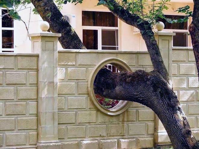 Những chủ nhà từ chối chặt cây cổ thụ trong công trình
