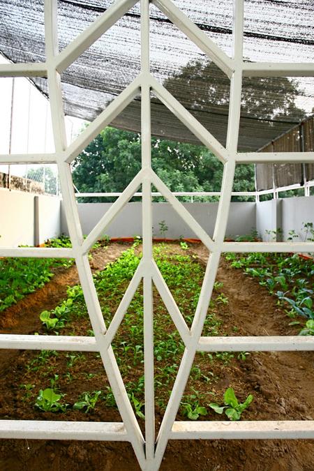 Trong rau tren mai 13 1442994972 660x0 Ngỡ ngàng nhà phố đổ đất trên mái trồng rau
