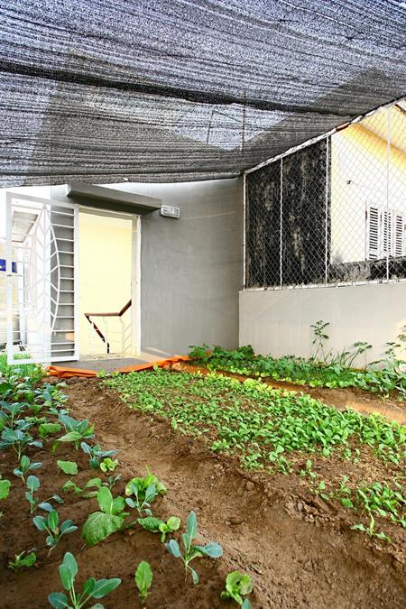 Trong rau tren mai 15 1442994972 660x0 Ngỡ ngàng nhà phố đổ đất trên mái trồng rau