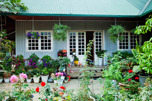 Những ngôi nhà giản dị nhưng vẫn đẹp như mơ nhờ hoa lá