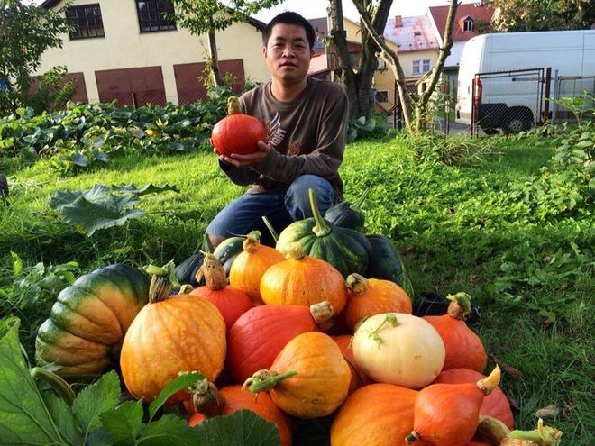 Vườn bí trĩu quả của gia đình Việt ở Séc