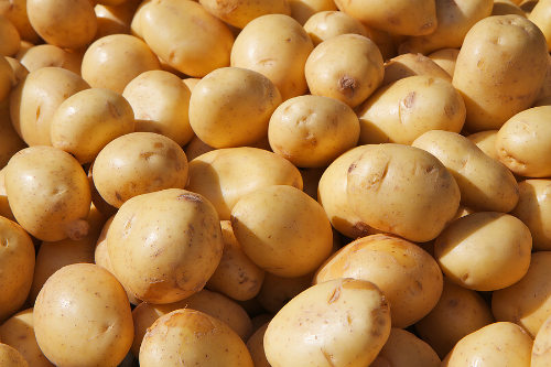 Potato-Yukon-gold1-4921-1450307607.jpg