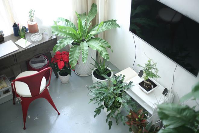 2 2 1450695756 660x0 Thiết kế không gian xanh mướt trong căn hộ 45 m2 ở Sài Gòn