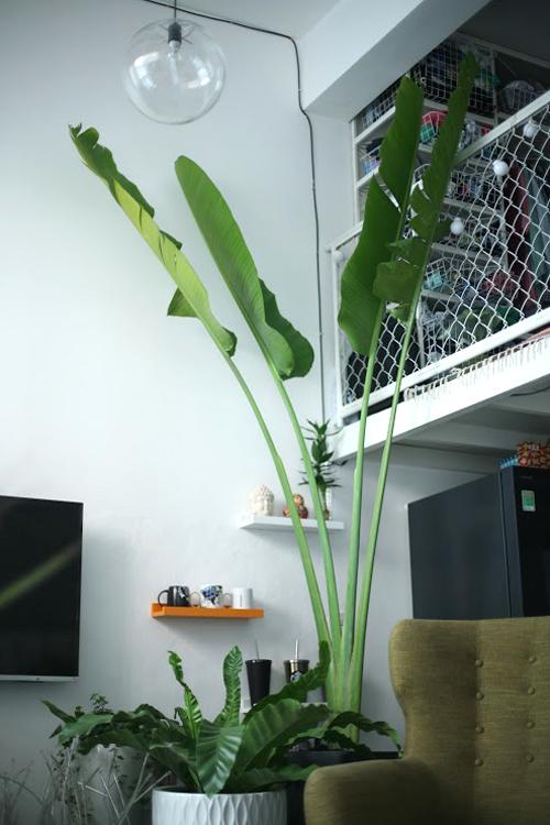 Không gian xanh mướt trong căn hộ 45 m2 ở Sài Gòn