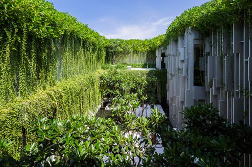 2 2641 1451557628 Cùng nhìn qua khu nhà phủ cây xanh mướt đoạt giải Công trình của năm